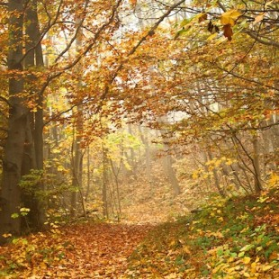 Reise-Herbstausfahrt
